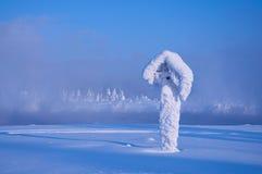 Det djupfryst och blivet dolt med rimfroststolpen i en stark frost, Ryssland, Sibirien Royaltyfri Fotografi