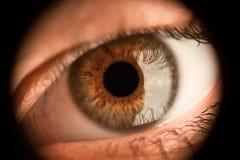 Det djupt - det bruna slutet upp ögat av flickan ser framåtriktat arkivfoton