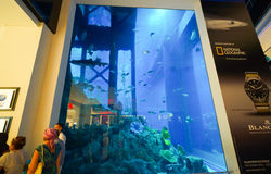Det Dubai akvariet & den undervattens- zoo i Dubai Mal Royaltyfria Bilder