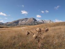 Det Durmitor berget Arkivfoto
