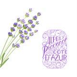 Det eleganta kortet för lavendel Det eleganta kortet för lavendel med ramen av blommor och text - Alpes provence franska riviera Arkivfoton