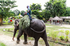 Det elepant och chauffören i chitwan, Nepal Royaltyfri Foto