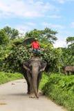 Det elepant och chauffören i chitwan, Nepal Fotografering för Bildbyråer