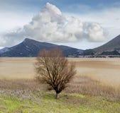 Det enkla trädet på sjön Royaltyfria Bilder