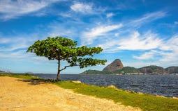 Det ensamma anseendegräsplanträdet och Guanabara skäller på den soliga dagen med S arkivfoto