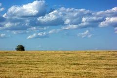 Det ensamma trädanseendet på en blå himmel för gult fält fördunklar Royaltyfri Bild