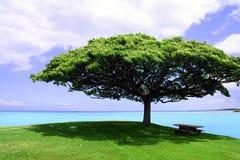 Det ensamma trädet Arkivbilder