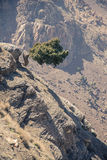 Det ensamma trädet för ställning på kartbok i Marocko Arkivbild