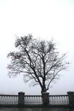 Det ensamma trädet i den dimmiga morgonen parkerar Arkivfoton