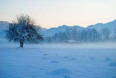 Det ensamma trädet i dimman med kojan Royaltyfri Foto