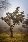 Det ensamma trädet i IOR parkerar royaltyfri fotografi