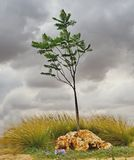 Det ensamma trädet i parkerar för en åskväder royaltyfria foton