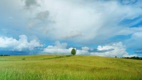Det ensamma trädet på grönt fält mot bakgrund för blå himmel på på åldern av ett år mot efterkrav och äter lösa blåbär i skog stock video