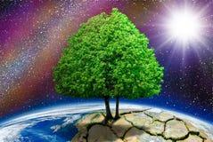Det ensamma trädet på planeten knäckte i backgrounen Fotografering för Bildbyråer