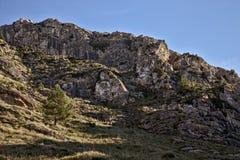 Det ensamma trädet på sida av en kulle med vaggar och gräs, blåa himlar, betlem, mallorca, Spanien arkivbild