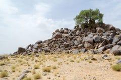 Det ensamma trädet av ett berg av vaggar överst i öknen Arkivfoto
