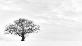 Det ensamma vinterträdet Arkivbilder