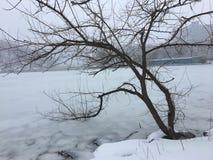 Det ensamma vinterträdet böjde in i den djupfrysta floden Arkivfoton