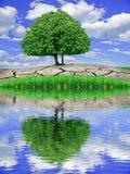 Det ensliga trädet reflekterade i vattnet mot den blåa himlen Fotografering för Bildbyråer