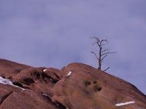 Det ensligt trädet och rött vaggar Fotografering för Bildbyråer