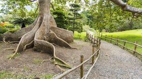 Det exotiska trädet rotar Royaltyfri Fotografi