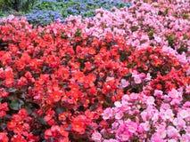 Det färgglade fältet av blommor stänger sig upp, blom- bakgrund Arkivbilder