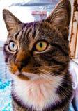 Det färgrika barnet vänder mot den strimmiga katten Arkivfoto