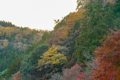 Det färgrika berget på Korankei - Asuke, Japan Arkivbild
