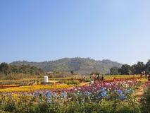 Det färgrika blom- parkerar Arkivbilder