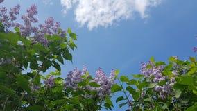 det färgrika blommaväxtträdet parkerar design för skönhetsommarinspiration Fotografering för Bildbyråer