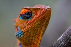 Det färgrika djura framsidaslutet sköt upp Royaltyfri Foto