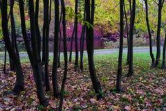 Det färgrika höstlandskapet, parkerar gränden och flodbanken Royaltyfri Foto