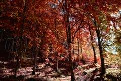 Det färgrika ljuset av höstskogen arkivbilder