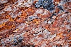 Det färgrika skället av sörjaträdet Royaltyfria Bilder