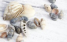 det fästande ihop isolerade banahavet shells white royaltyfri bild