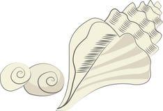 det fästande ihop isolerade banahavet shells white Royaltyfria Bilder