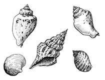 det fästande ihop isolerade banahavet shells white royaltyfri illustrationer