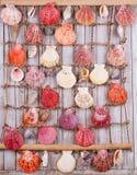 det fästande ihop isolerade banahavet shells white tropisk bakgrund Sömlös modell för en design bakgrundsborsteclosen isolerade f Arkivfoton