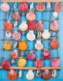 det fästande ihop isolerade banahavet shells white tropisk bakgrund Sömlös modell för en design bakgrundsborsteclosen isolerade f Fotografering för Bildbyråer