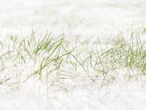 Det första skoggräset som bryter till och med snön under solljuset royaltyfri bild