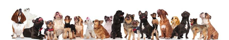 Det förtjusande laget av åtta hundkapplöpning klädde som jäkel arkivfoton
