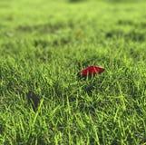 Det fallande kronbladet på det gröna gräset Royaltyfri Fotografi