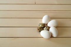 Det fega redet och ägg, bilder av äggen i vaktel`en s bygga bo, höna- och vaktelägg, pic Royaltyfria Bilder