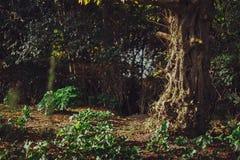 Det felika trädet parkerar in Royaltyfri Fotografi