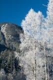 Det fina vinterberglandskapet solig dag Vinternedgång De ljusa färgerna Flod för vinterskogskog Filialer i hoar Royaltyfri Fotografi