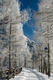 Det fina vinterberglandskapet solig dag Vinternedgång De ljusa färgerna Flod för vinterskogskog Filialer i hoar Royaltyfri Bild