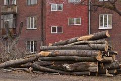 Det finns avverkade träd i en stads- trädgård Arkivfoton
