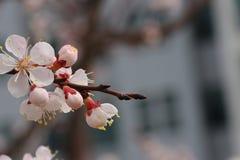 Det finns några av blommor Royaltyfri Bild