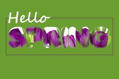 Det finns text för blommor på våren Arkivfoto