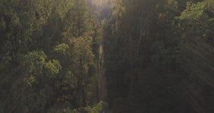 Det flyg- flyget över höstträd i löst parkerar i september Royaltyfria Foton